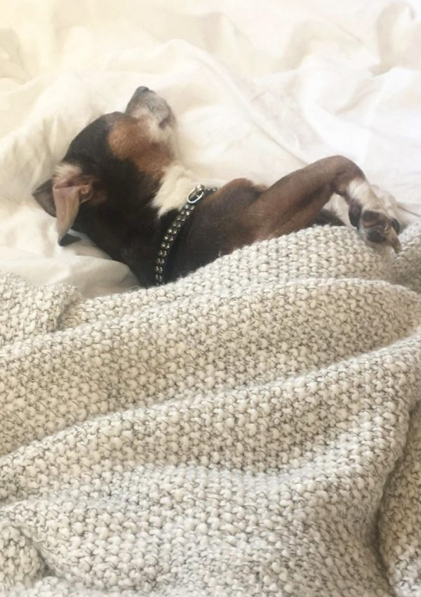 Losing My ESA Dog, Rylie
